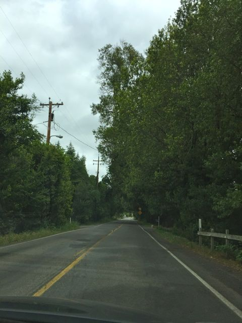 Image of road surrounded by beautiful trees
