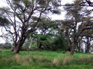 Trees on Great Mell Fell