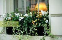 Decorating  Winter Window Boxes - Inspiring Photos ...