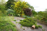 GAP Gardens - Gravel area with topiary and terracotta urn ...