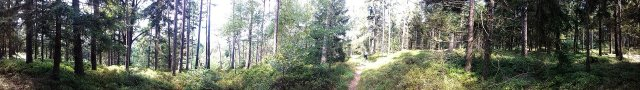 Pfad auf dem bewaldeten Kamm in Richtung Fürstberg