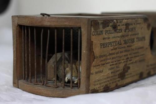 Museum-invading-mouse-ensnared-by-displays-155-year-old-mousetrap