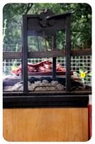 Día 227/365 : Agosto 17, 2013 : Carne asada de titos