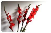 Día 260/365 : Septiembre 19, 2013 : Las flores que me compró mi amor, te amo!