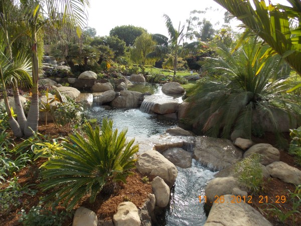 tropical water garden garcia