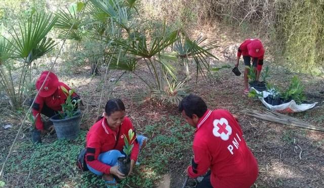 Peduli Lingkungan, PMI Belu Tanam 2.000 Anakan Pohon