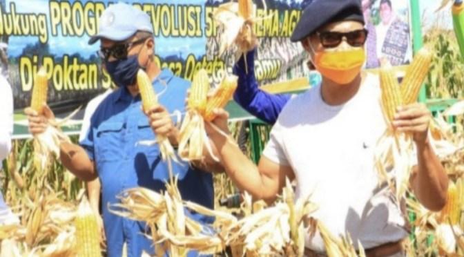 Panen Jagung Program TJPS di Kab. Kupang, Gubernur NTT: Belajar dari Kisah Yesus