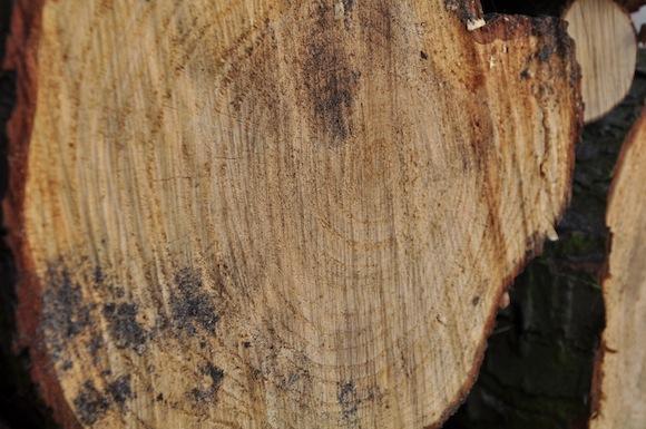 So sieht das Holz nach dem Sägen aus.