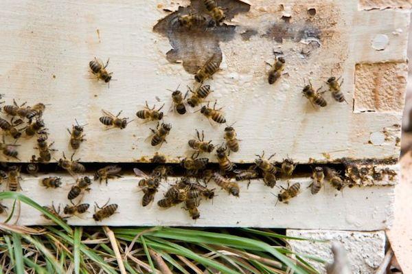 DIY: Ein Insektenhotel für den eigenen Garten