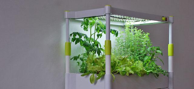 kr uter anpflanzen ohne sonnenlicht greenyou vorgestellt garden blog. Black Bedroom Furniture Sets. Home Design Ideas