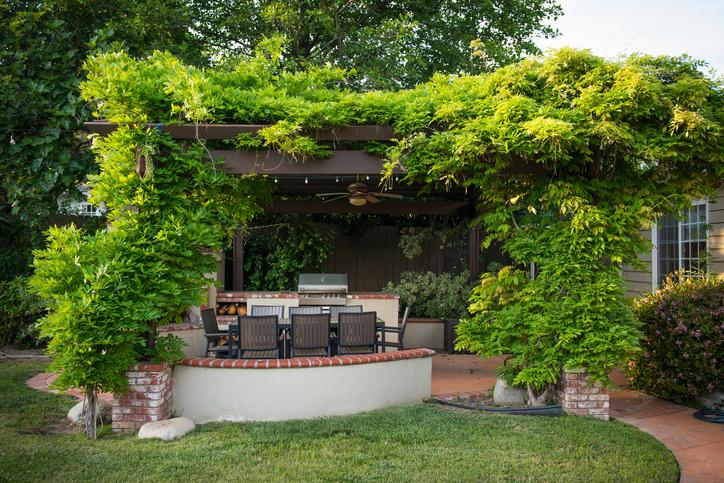 Kletterpflanzen: farbenfrohe Klassiker für Terrasse und Garten