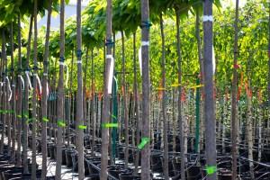 Etykiety pętelkowe wykonane zAllfolin występują wróżnych kolorach - czerwonym, żółtym, niebieskim. Nadal jednak, mimo barwy, pozostają odporne nadeszcz ipromienie słoneczne. Fot.Garden Label.