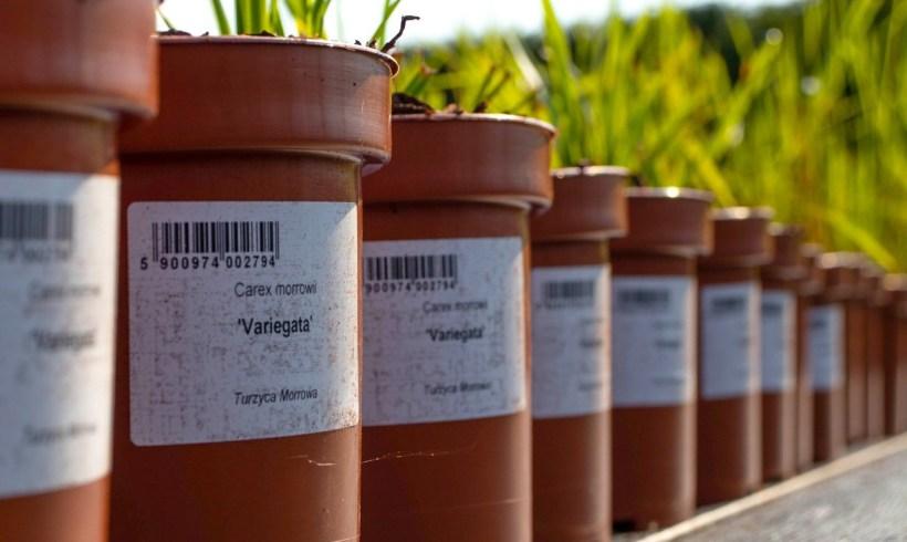 Etykiety ogrodnicze – Jakie etykiety doroślin wybrać?