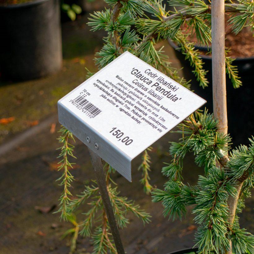 Etykiety samoprzylepne znadrukiem – jakie mają zastosowanie?