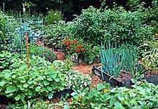 Edible Landscaping Vegetable Garden Design Garden Org