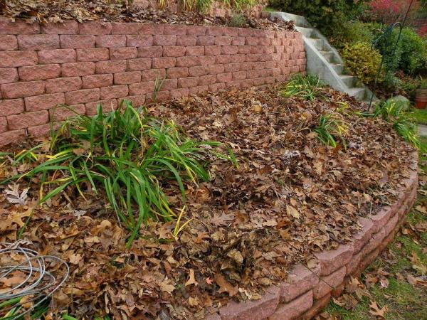 collect curbside fall leaves