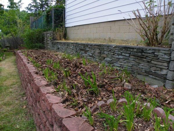 mulch daylilies with fall