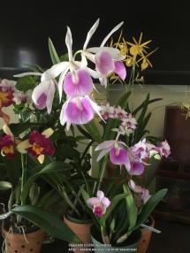 Orchids Forum