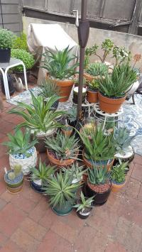 Surprising Succulents For Shade Gallery - Best Image ...