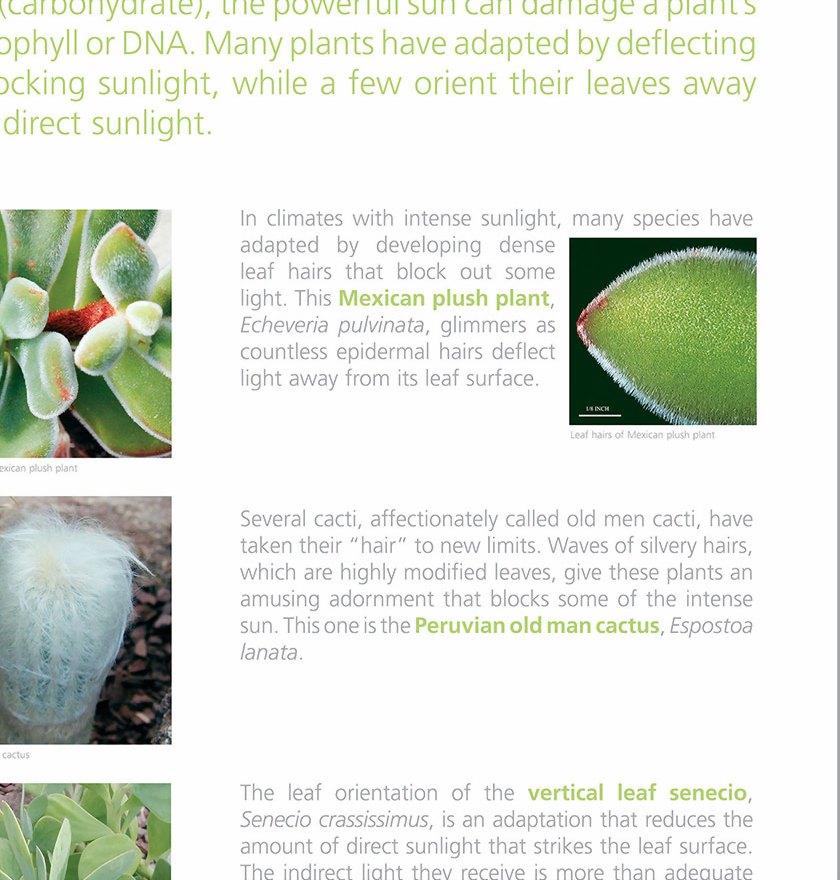 Plant Adaptation Sunbathers Panel   The Botanic Garden of ...
