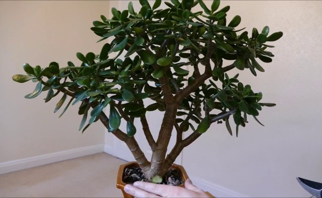 5 Hard To Kill Houseplants For Lazy Plant Lovers