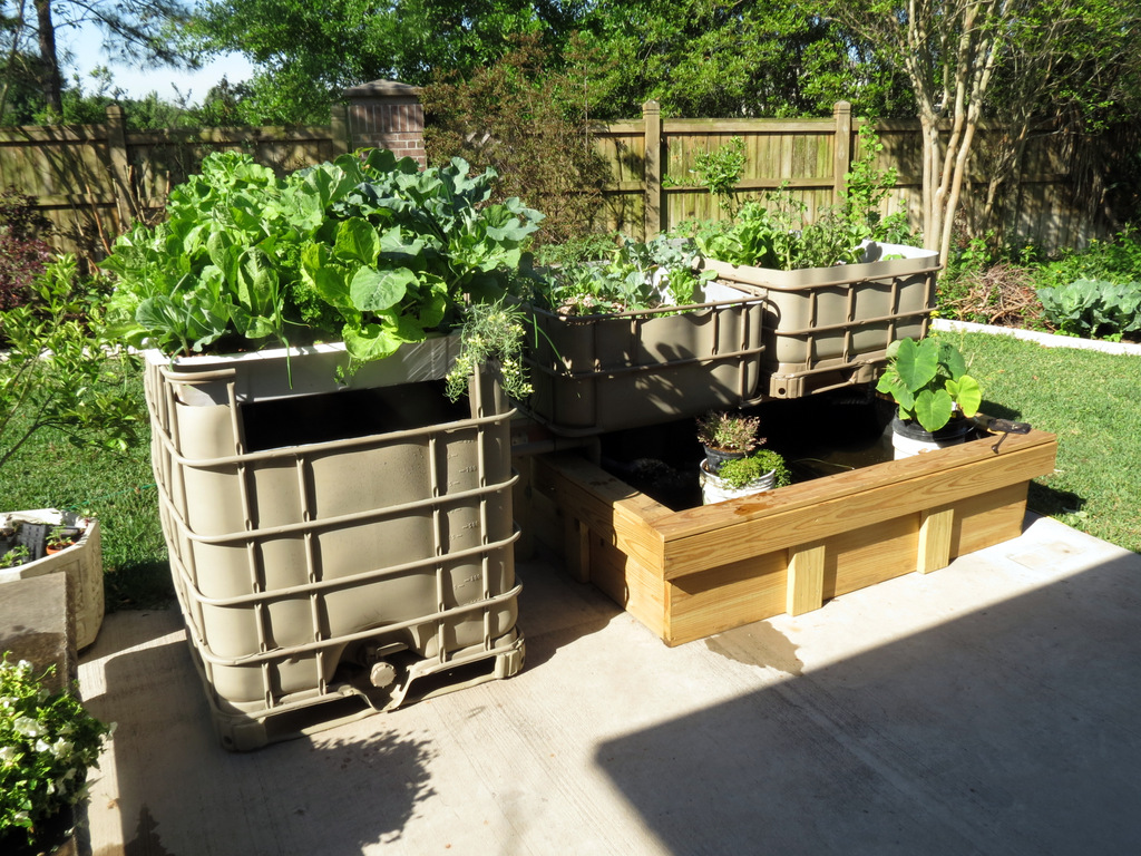 Maintenance Tips For An Aquaponics System