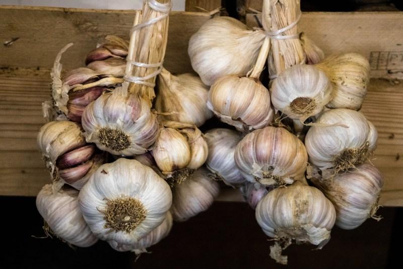 garlic varieties, garlic types, garlic, growing garlic, planting fall garlic, softneck garlic, silverskin garlic