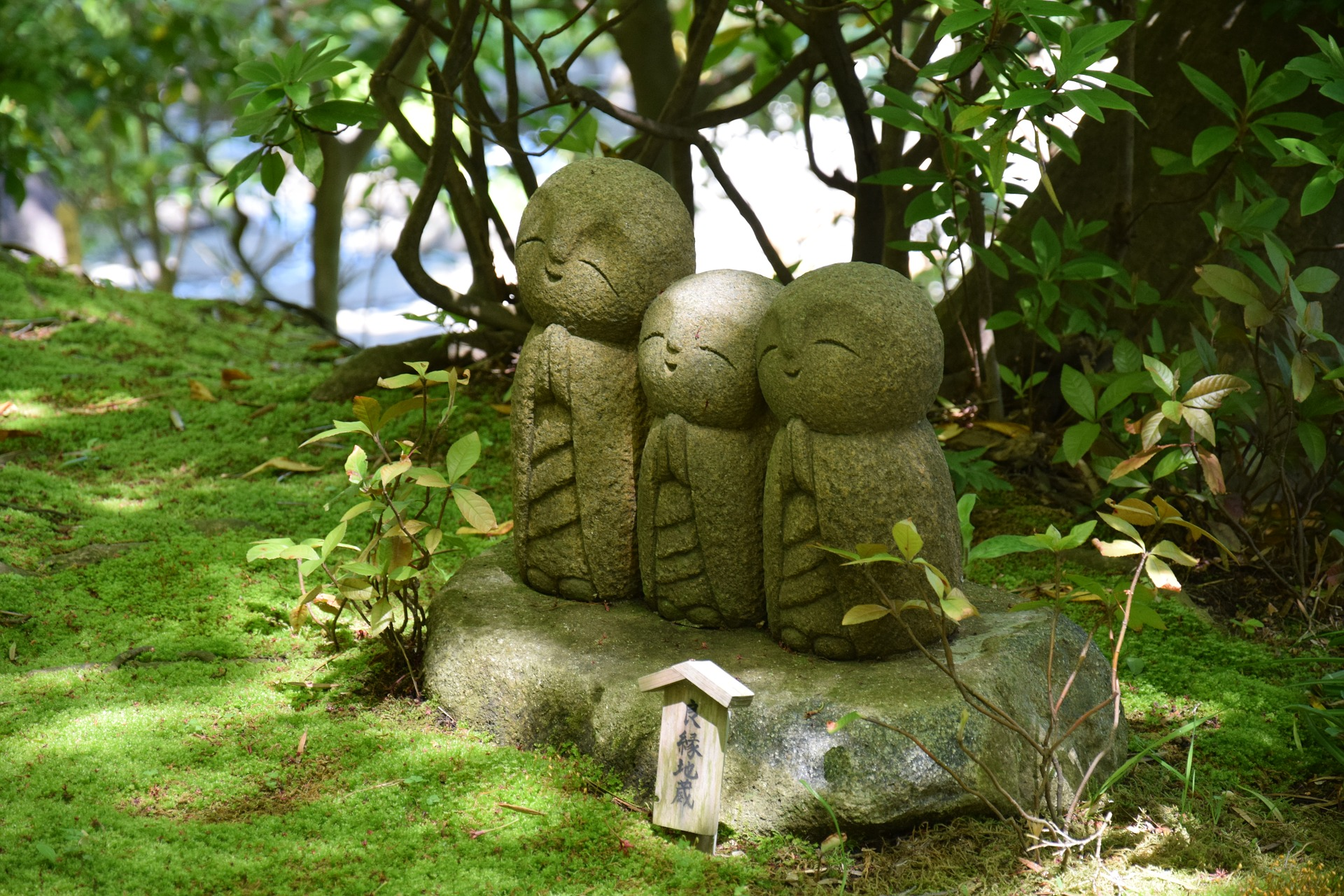 Top Design Ideas (and Plants) for Creating a Gorgeous Feng Shui Garden