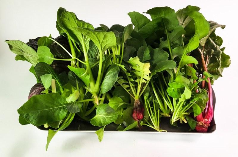 kratky method hydroponics