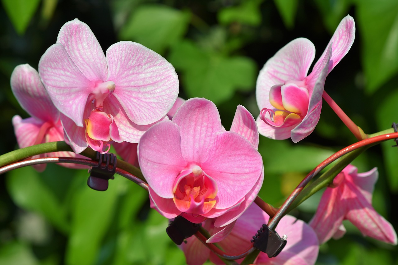 The Most Extraordinary Types of Orchids, and How to Grow Them