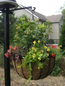 "Bellus Large Hanging Baskets 14"" And 22"" - Extra Deep"