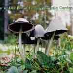 how-to-get-rid-of-fungus-from-the-garden-soil