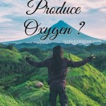 Do all Plants Produce Oxygen