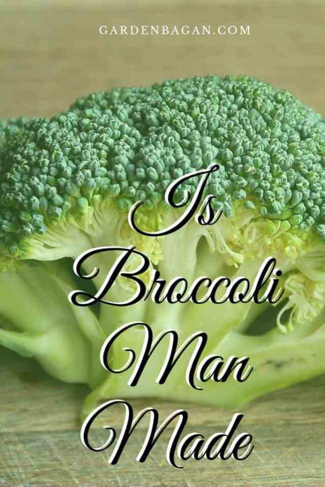 Is Broccoli Man Made