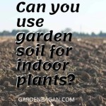 Can you use garden soil for indoor plants