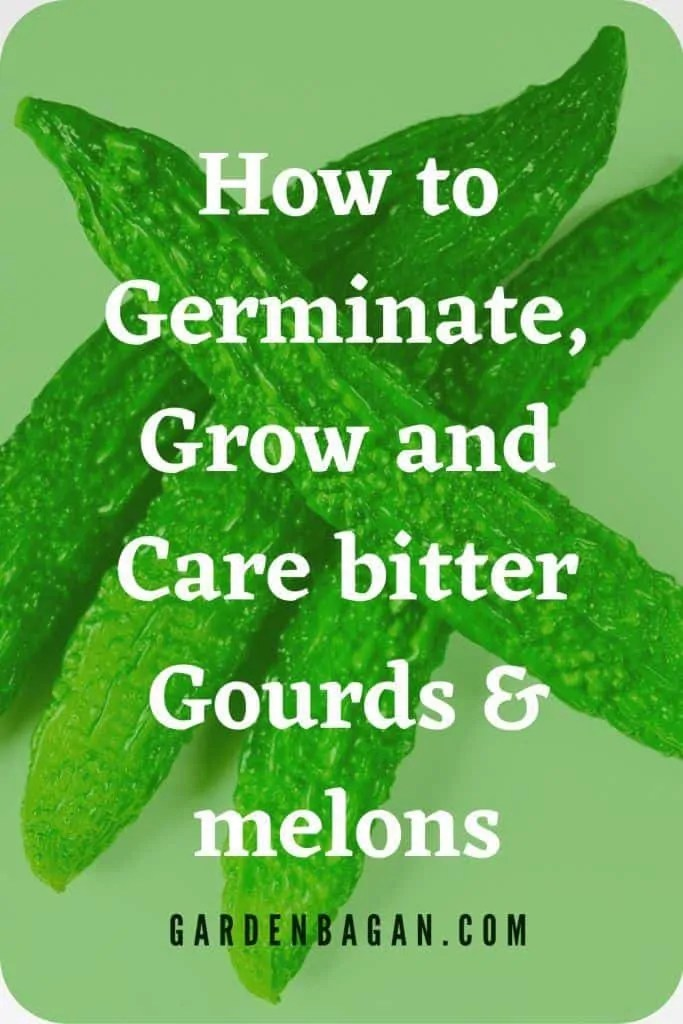 How to Germinate, Grow and Care bitter Gourds & melons