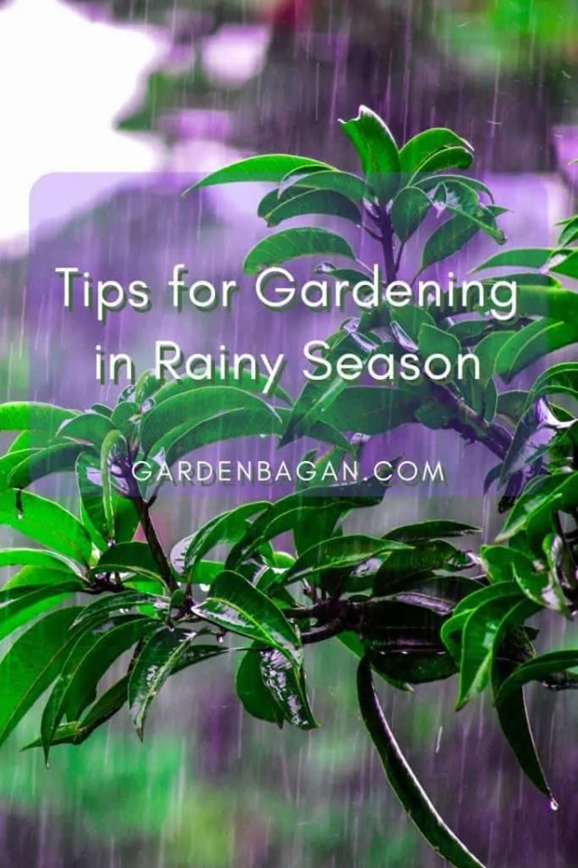 Tips for Gardening in Rainy Season