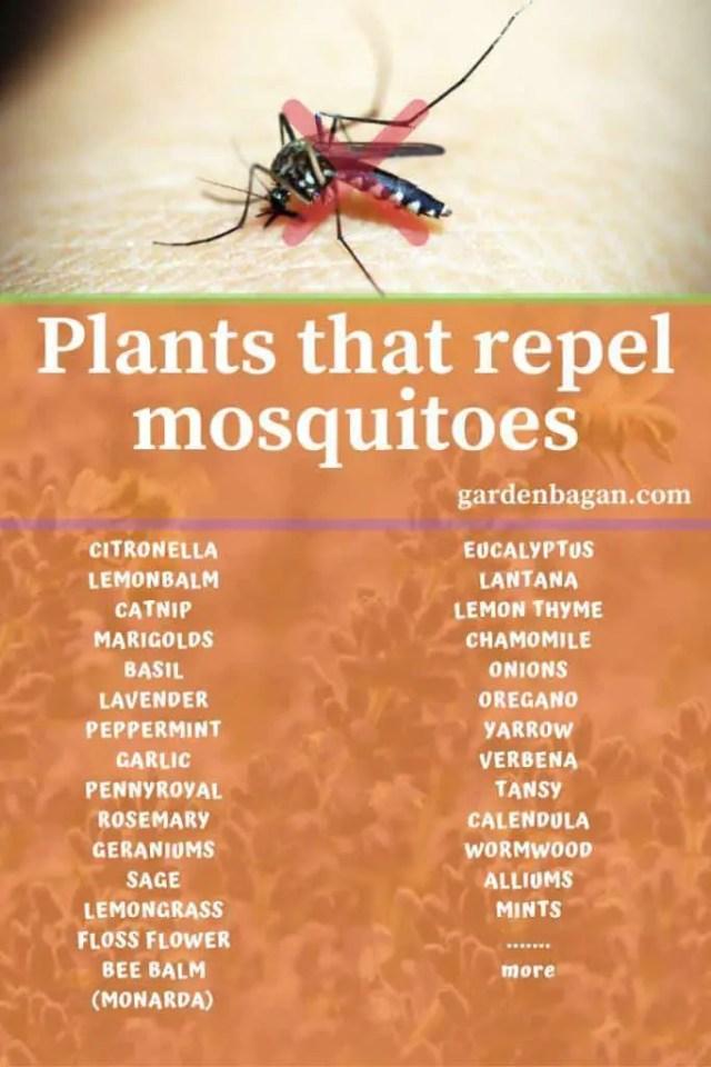 mosquito repellent plant list