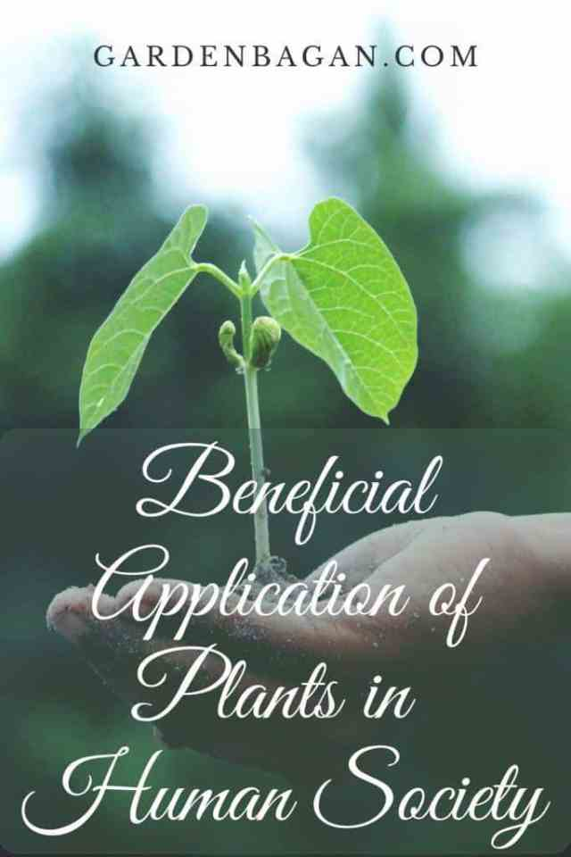 Beneficial Application of Plants in Human Society