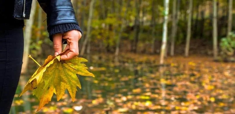how-to-fix-leaves-turning-yellow