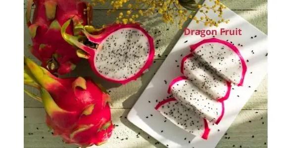 dragon fruit cactus