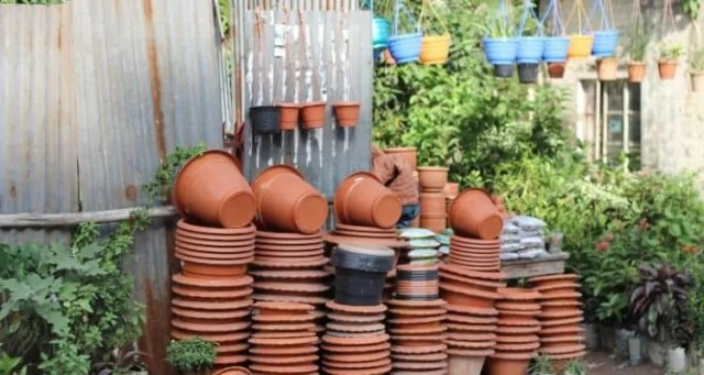 know the Pros & Cons of Container Gardening