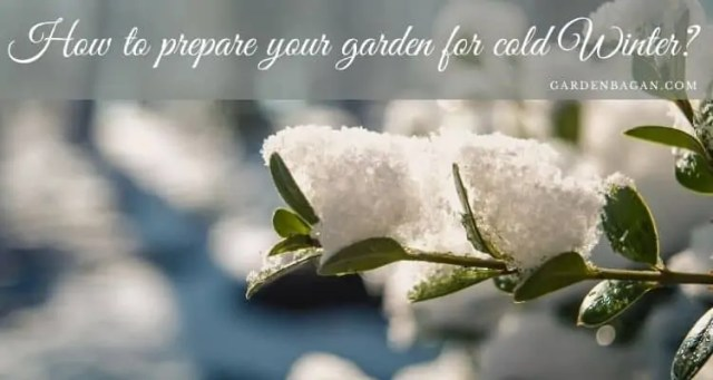 How to prepare your garden for cold Winter
