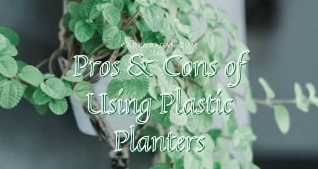 Pros & Cons of Using Plastic Planters