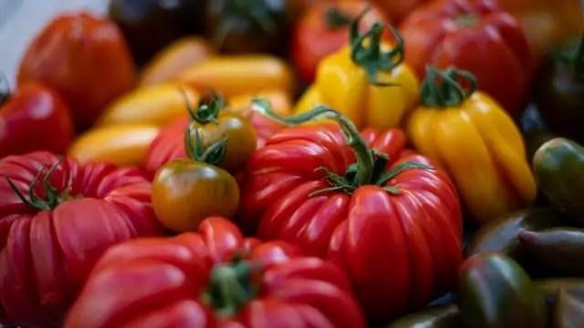 Beefsteak-tomato