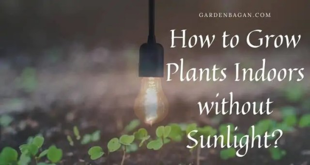 How to Grow Plants Indoors without Sunlight