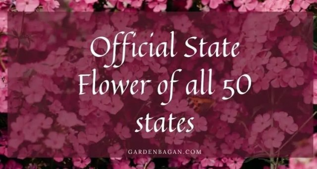 official flower of states