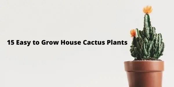Easy to Grow House Cactus Plants