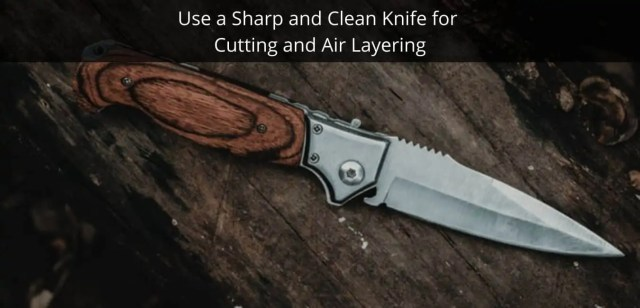 Use a Sharp and Clean Knife for Cutting and Air Layering