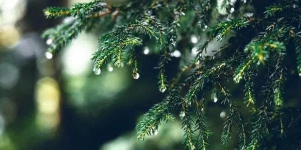 Eco-Friendly Ways to Decorate Christmas Tree